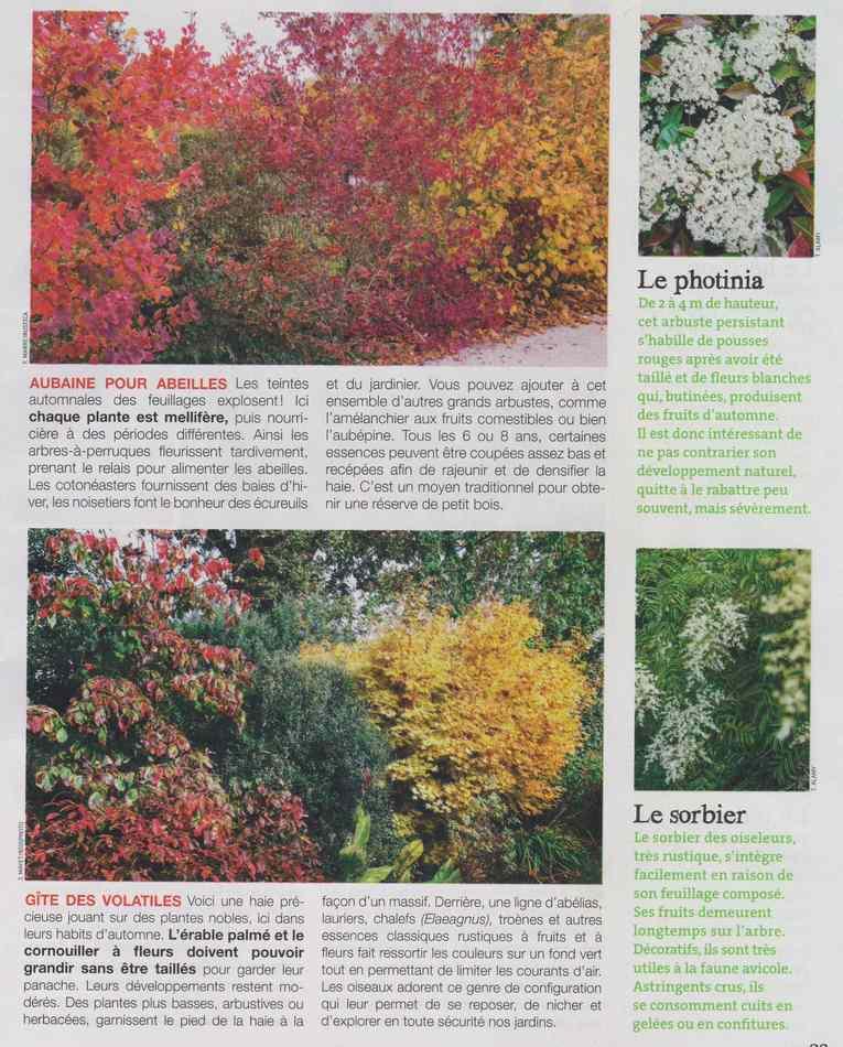 au jardin - Page 18 5510