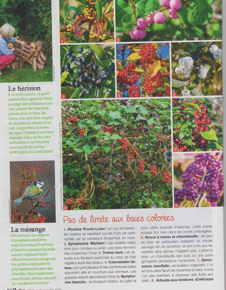 au jardin - Page 18 5610