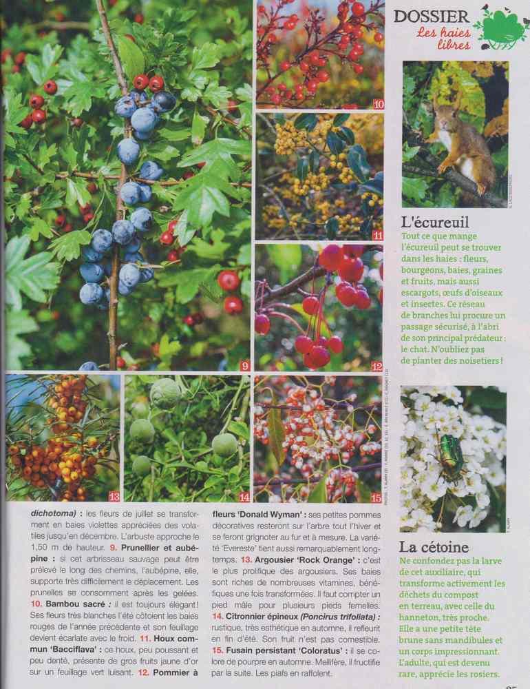 au jardin - Page 18 5710