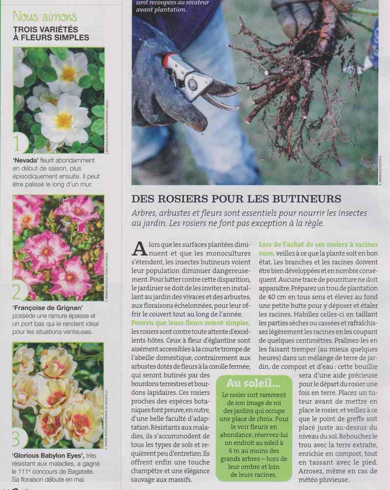 au jardin - Page 18 5810