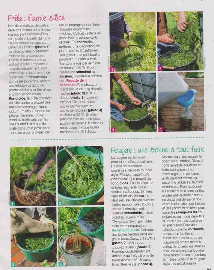 au jardin - Page 36 588