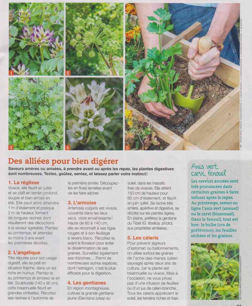 les plantes qui soignent - Page 4 613