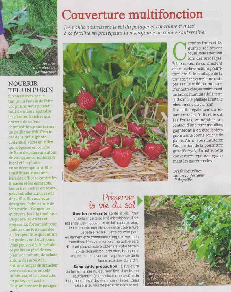 au jardin - Page 5 620