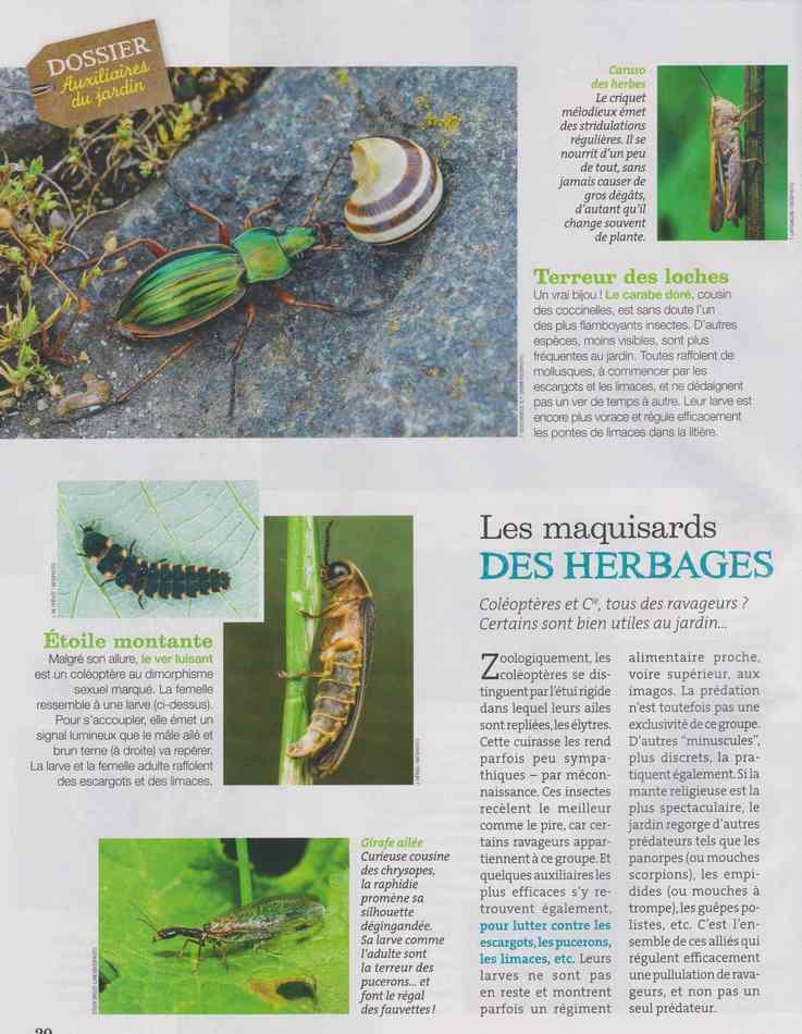 au jardin - Page 5 621