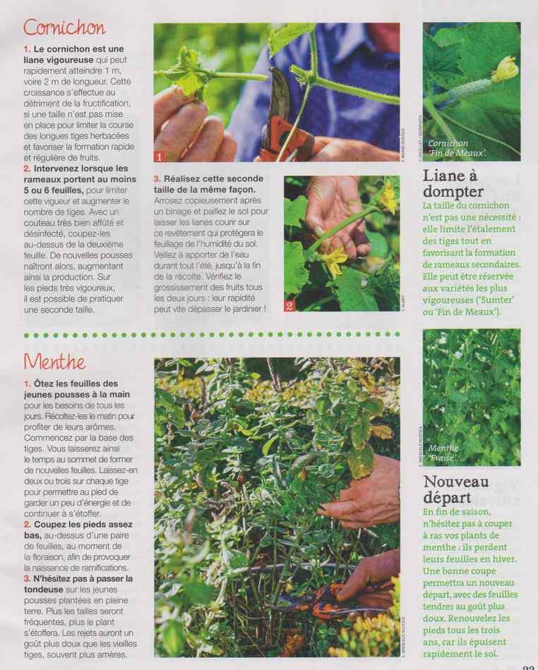 au jardin - Page 9 630