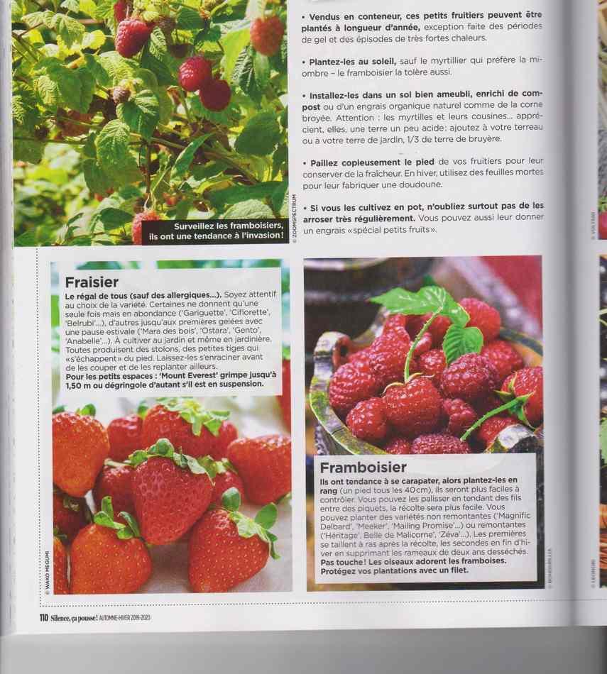 au jardin - Page 17 6310