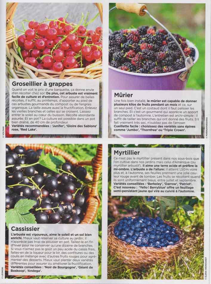 au jardin - Page 17 6410