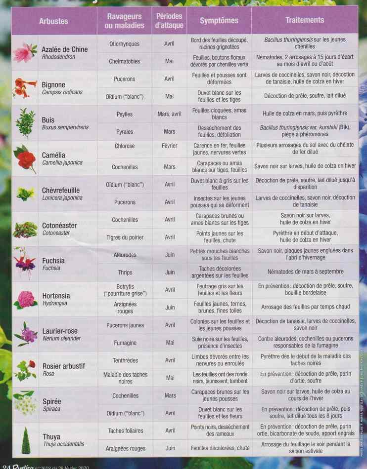 au jardin - Page 28 656