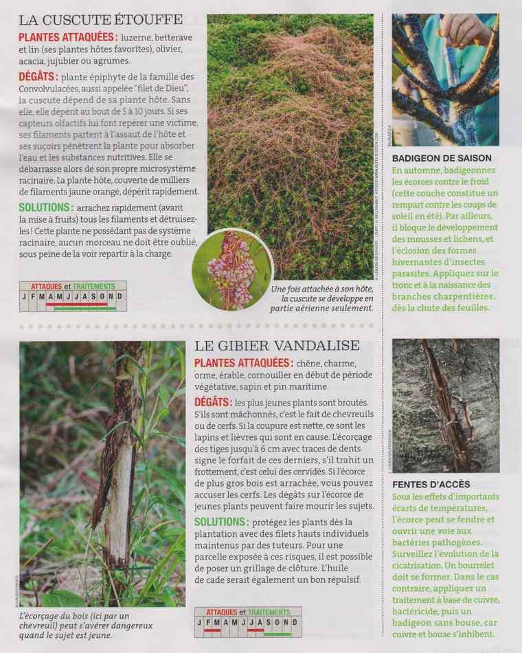 au jardin - Page 16 7010