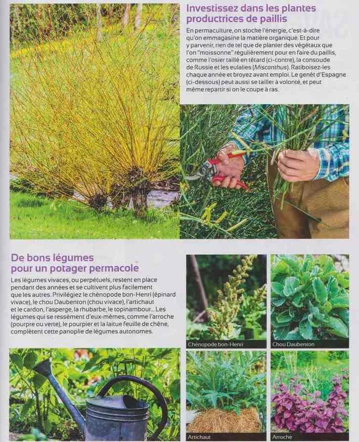 au jardin - Page 2 711