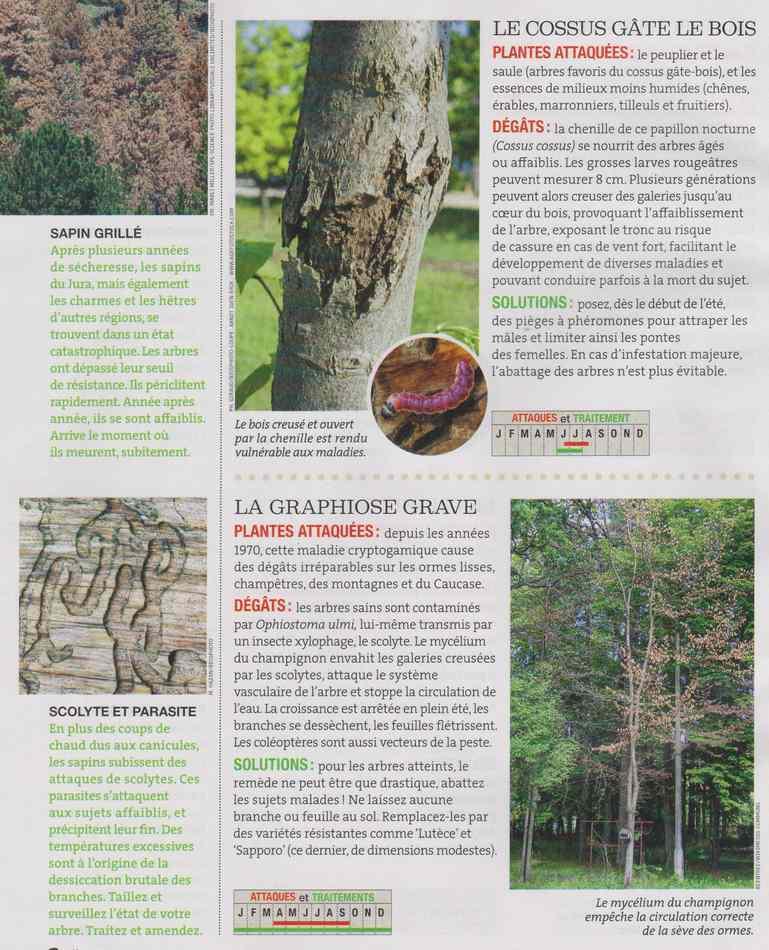 au jardin - Page 16 7110
