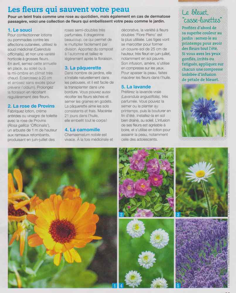 les plantes qui soignent - Page 4 712