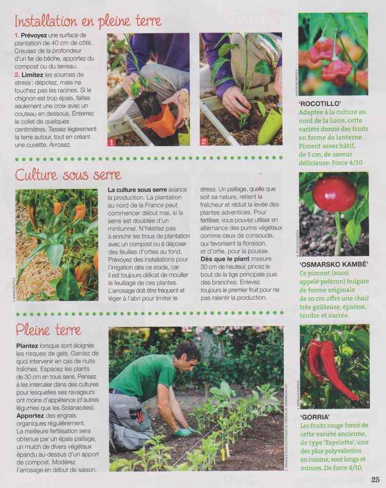 au jardin - Page 3 713