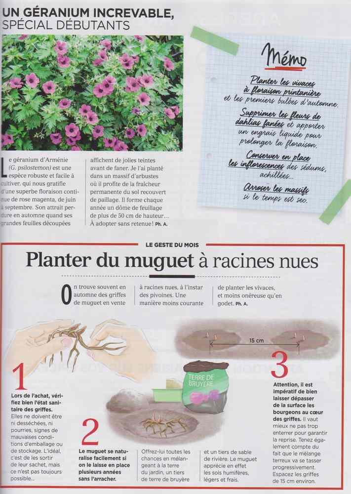 au jardin - Page 10 734