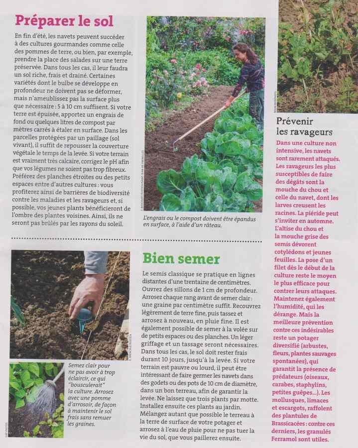 au jardin - Page 11 736