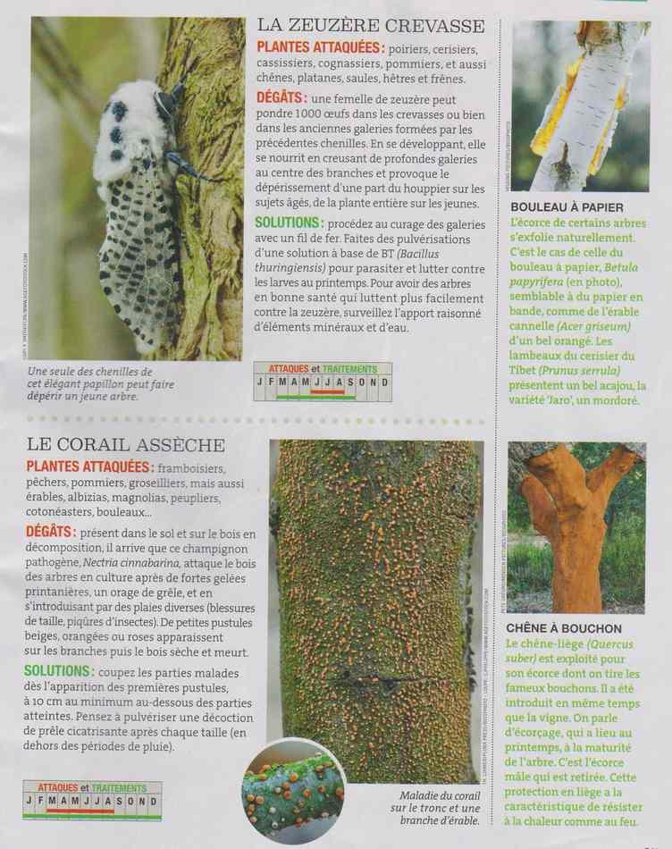au jardin - Page 17 7410