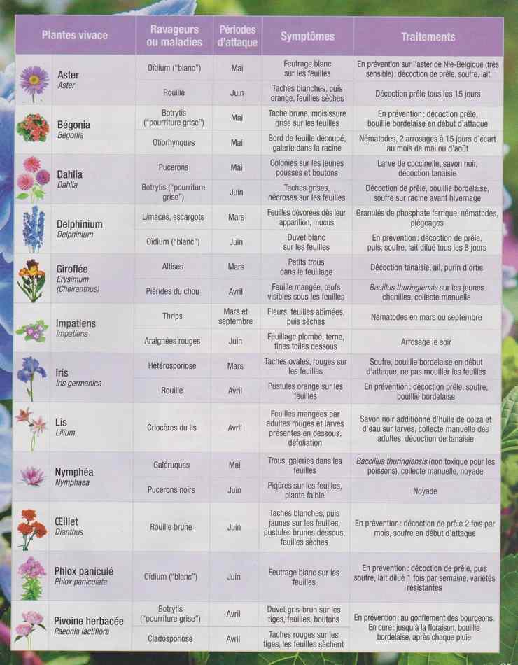 au jardin - Page 28 765