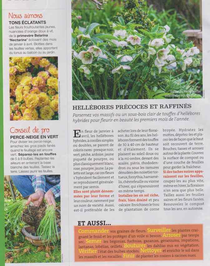 au jardin - Page 28 8111