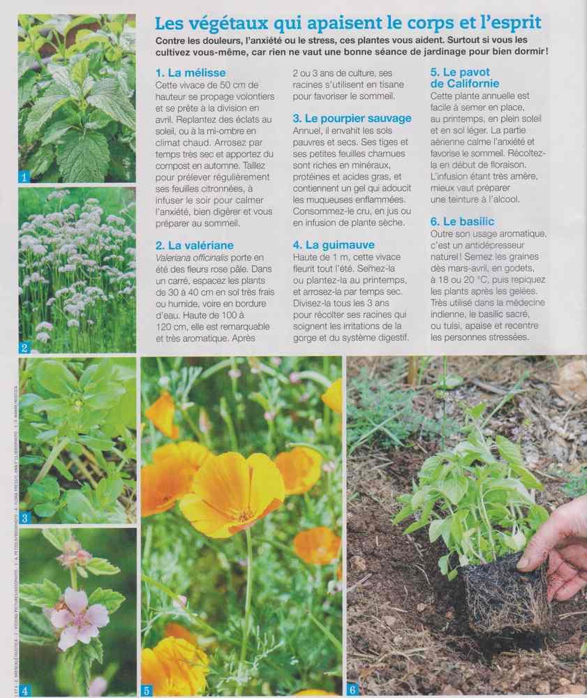 les plantes qui soignent - Page 4 813