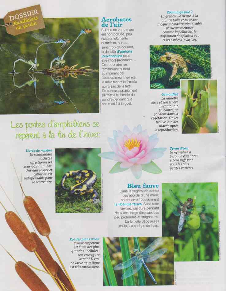 au jardin - Page 5 819