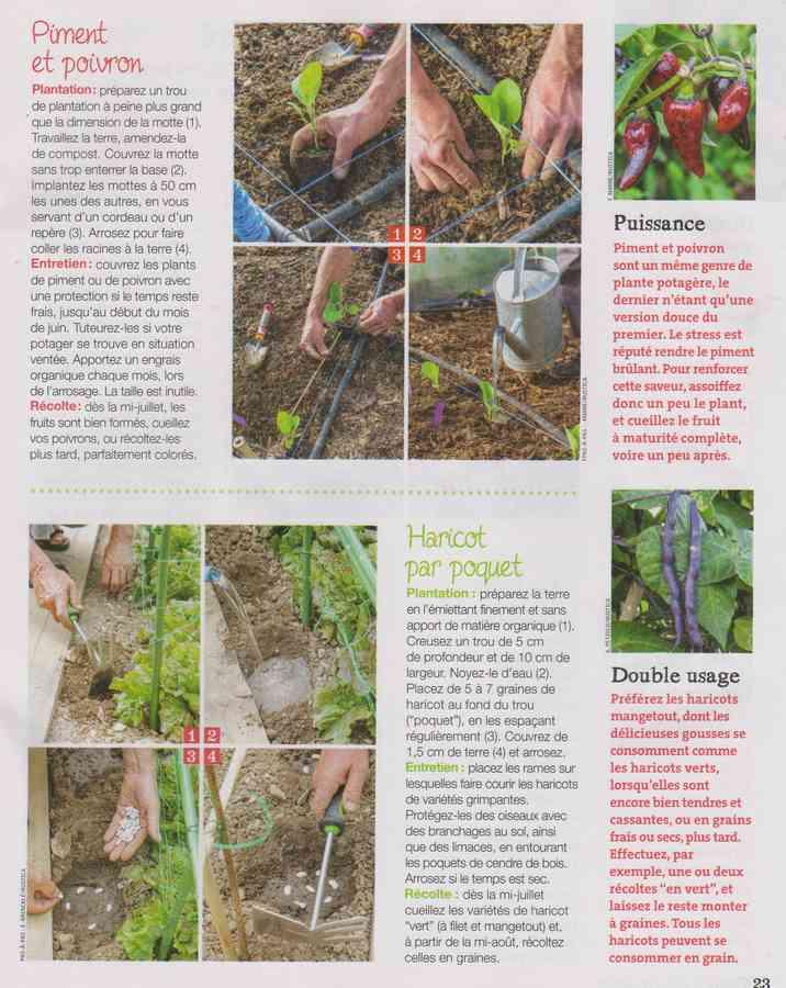 au jardin - Page 34 863