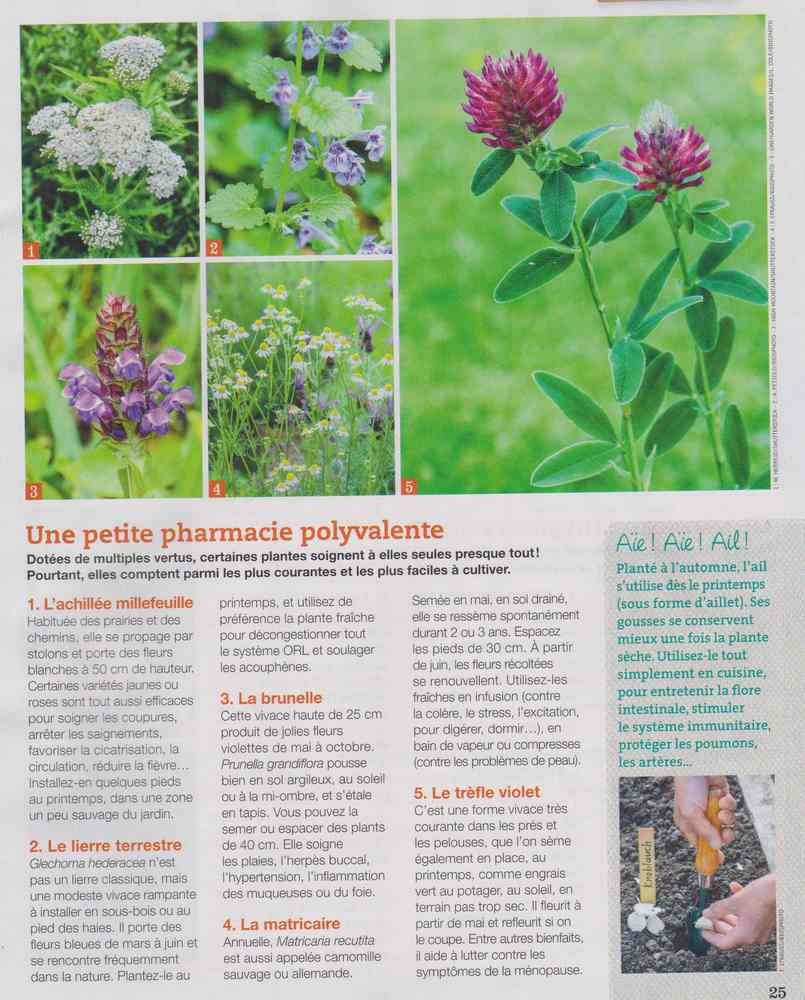 les plantes qui soignent - Page 4 914