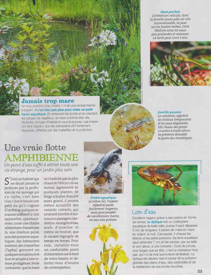au jardin - Page 5 917