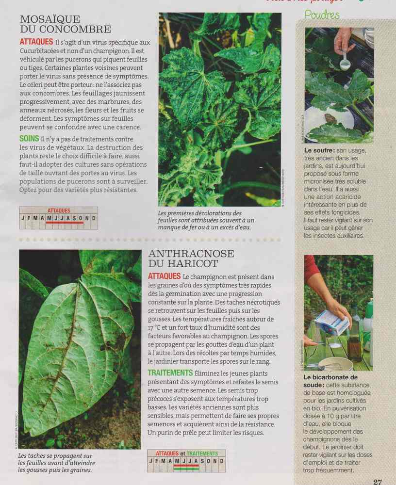 au jardin - Page 6 919