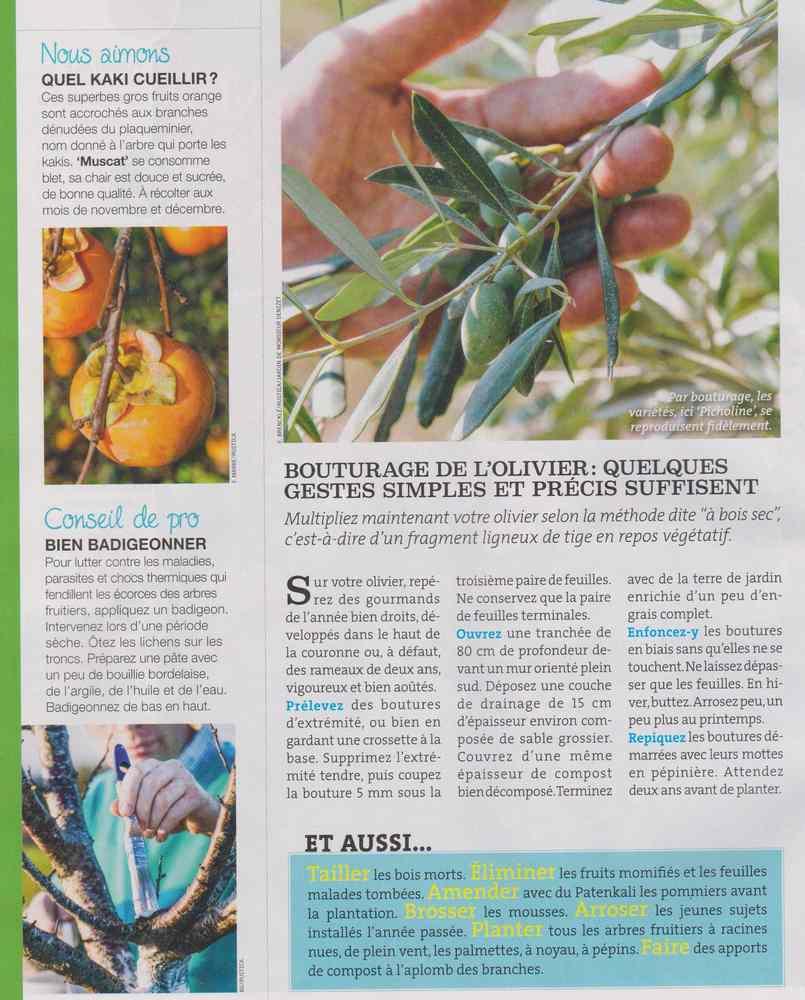 au jardin - Page 17 937