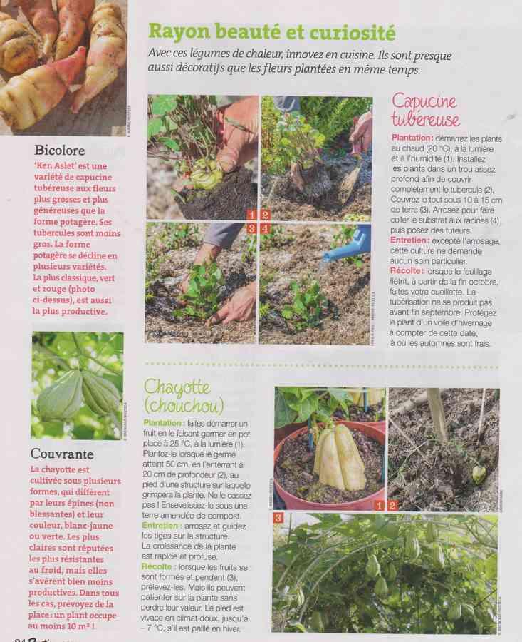 au jardin - Page 34 960