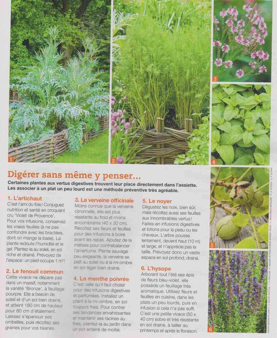 ces plantes qui nous veulent du bien.... A110
