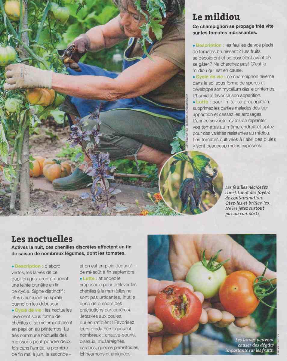les maladies et parasites au jardin A12