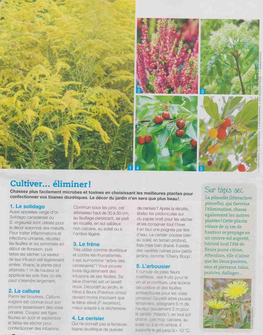 ces plantes qui nous veulent du bien.... A210
