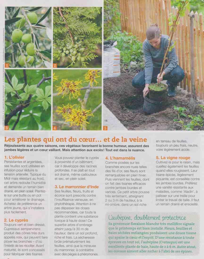 ces plantes qui nous veulent du bien.... A410