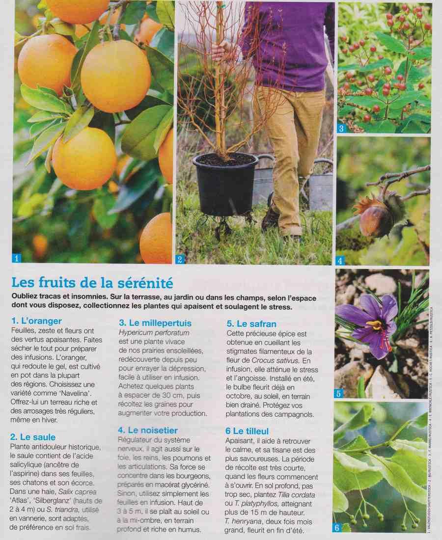 ces plantes qui nous veulent du bien.... A510