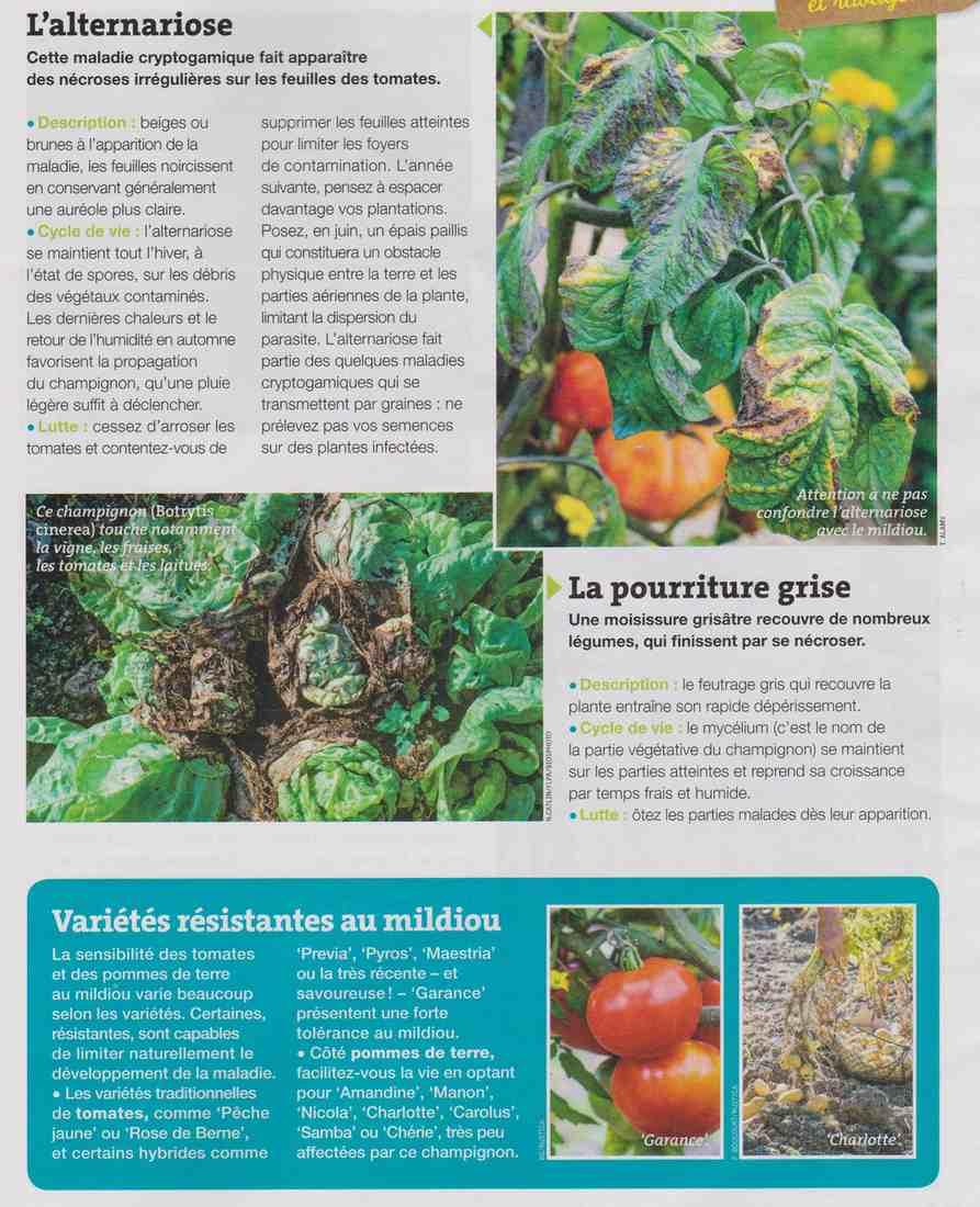 les maladies et parasites au jardin Aa15
