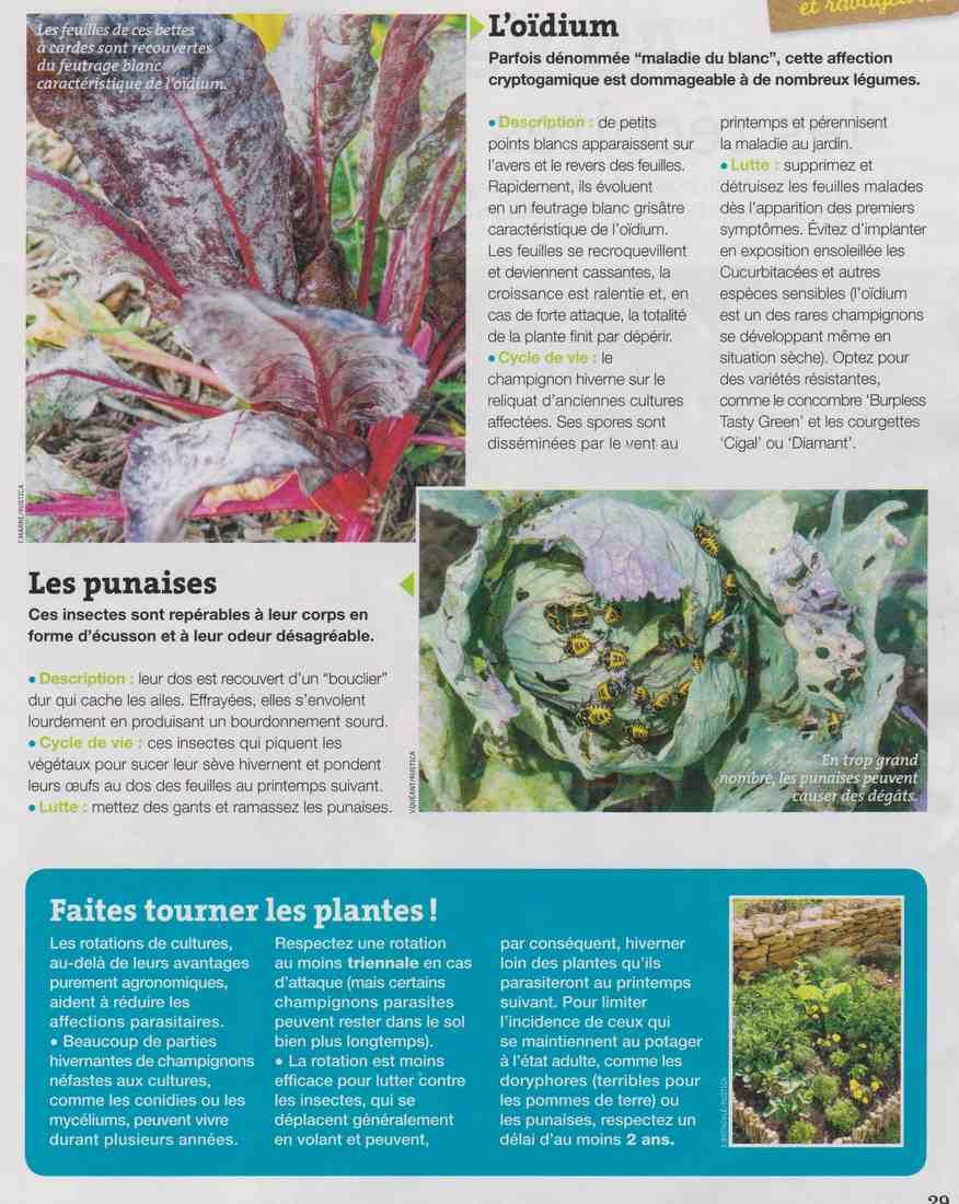 les maladies et parasites au jardin Aaaa11