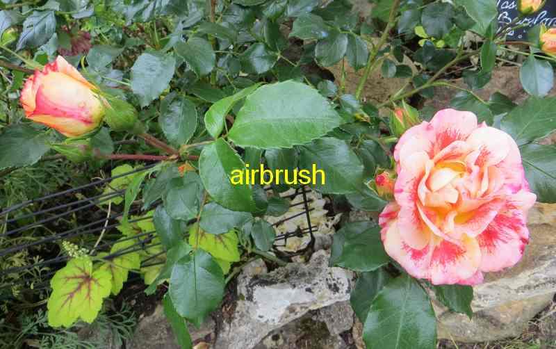 roses en vrac - Page 8 Airbru12