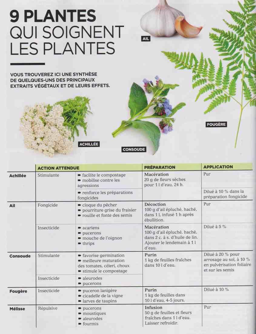 les plantes qui soignent C113