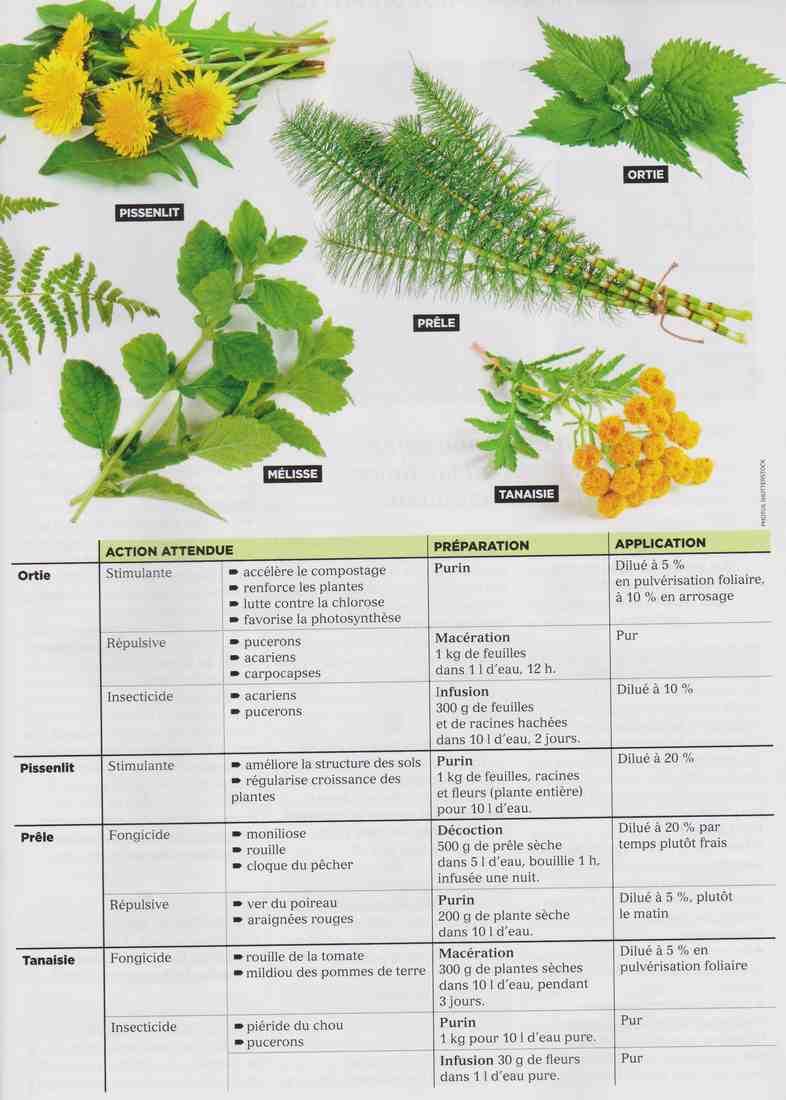 les plantes qui soignent D111