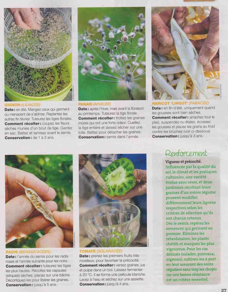 multiplier les aromatiques et légumes Ee11