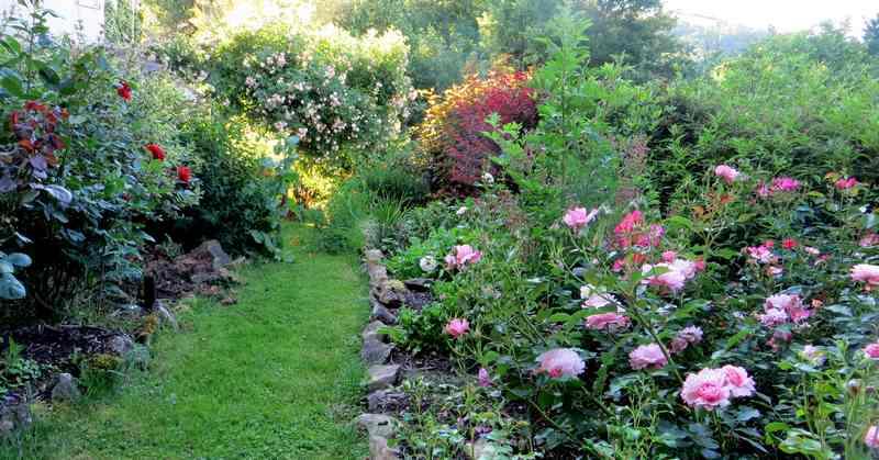 roses en vrac - Page 9 Ghisla12