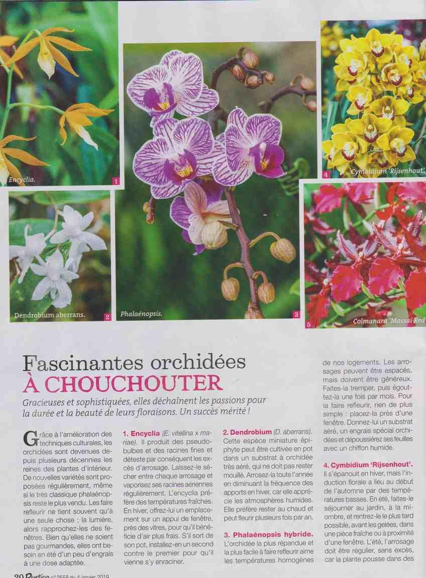 les orchidées  I110