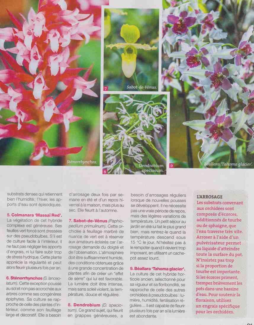 les orchidées  I210