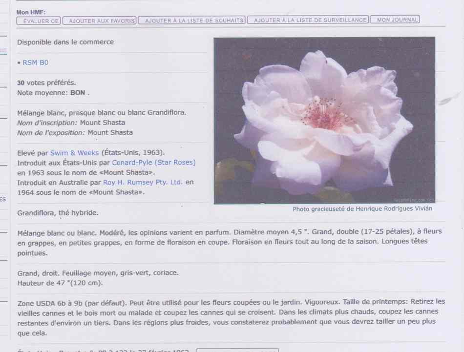 Rosa ' Mount Shasta'! Image_11