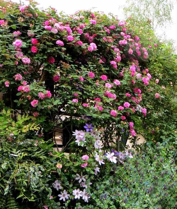 roses en vrac Img_4724