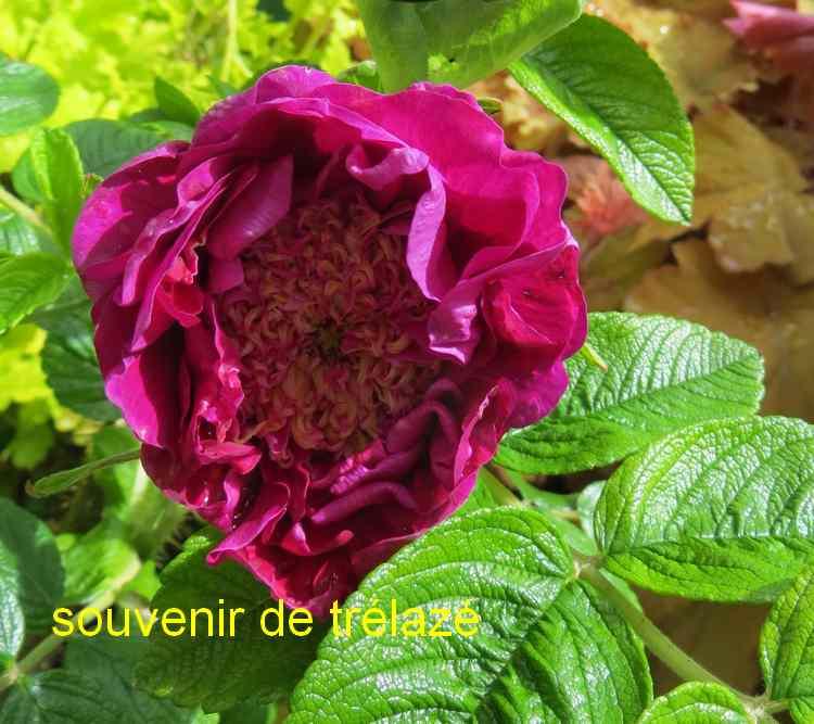 roses en vrac - Page 2 Img_4741