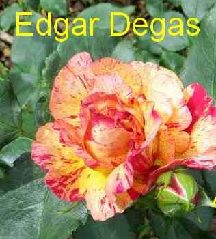 roses en vrac - Page 2 Img_4745