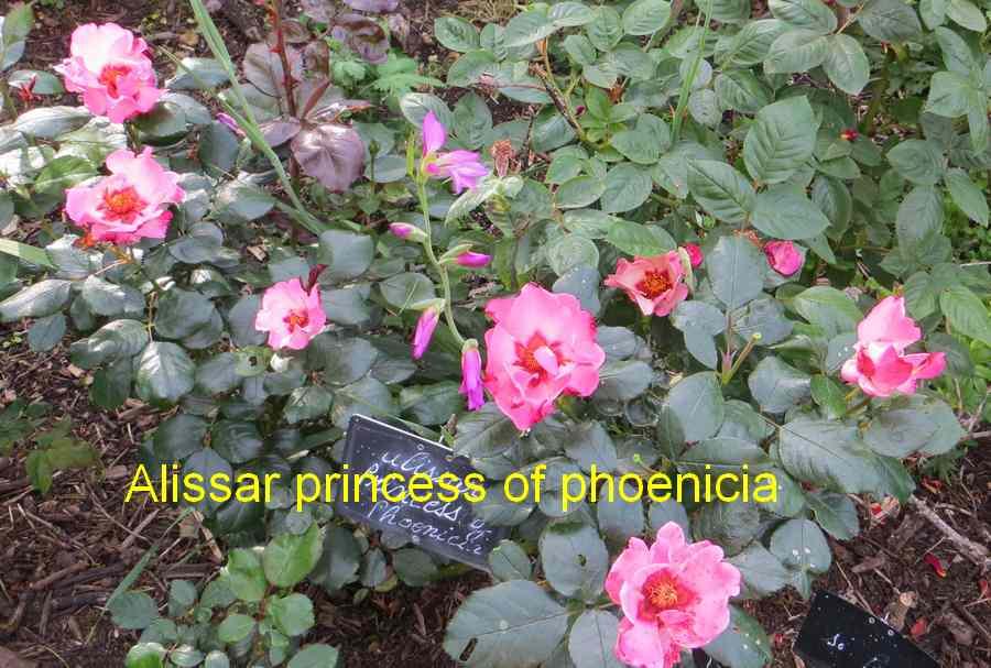 roses en vrac - Page 2 Img_4751