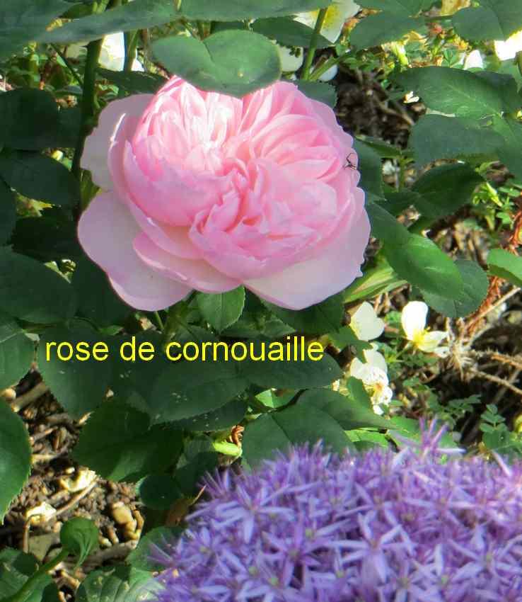 roses en vrac - Page 3 Img_4761